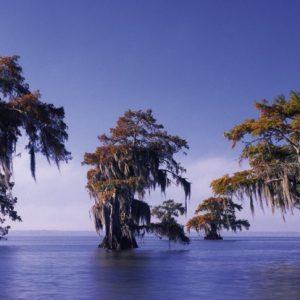 water bomen