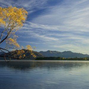 landschap water boom bergen