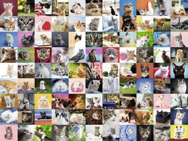 99 katten kittens