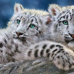 Castorland060115 Snow Leopard Cubs 01 Legpuzzels