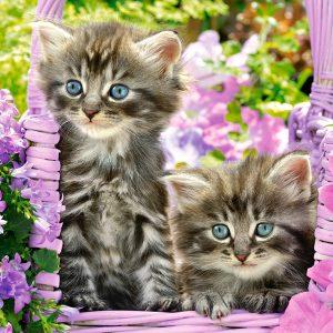 Castorland104086 2 Kittens In Summer Garden 01 Legpuzzels