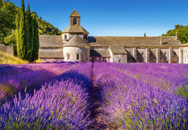 Castorland104284 2 Lavender Field In Provence France 01 Legpuzzels