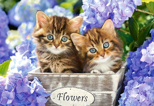Castorland151561 2 Cute Kittens 01 Legpuzzels