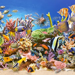 Castorland400089 2 Underwater Life 01 Legpuzzels