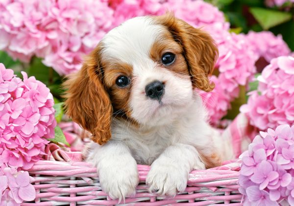 Castorland52233 2 Pup In Pink Flowers 01 Legpuzzels