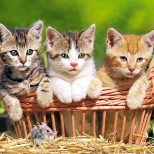 Castorland52561 Three Lovely Kittens 01 Legpuzzels
