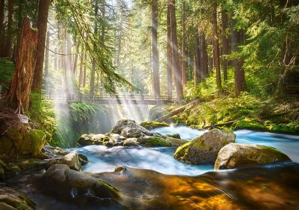 Castorland52875 Forest Stream Of Light 01 Legpuzzels