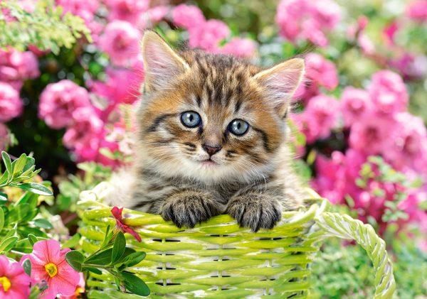 Castorland52974 Kitten In Flower Garden 01 Legpuzzels
