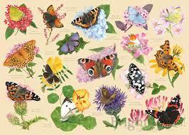 garden butterflies mc530 1 the house of