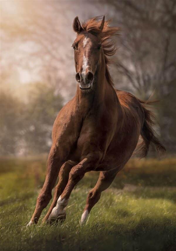 Paard Clementoni