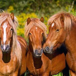 Horse Friends Castorland103959 2 01 Legpuzzels