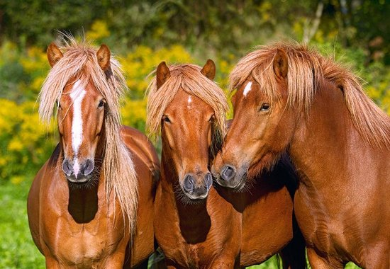 Horse Friends Castorland Paard