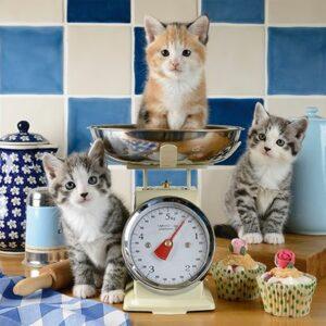 Katten In De Keuken Schmidt