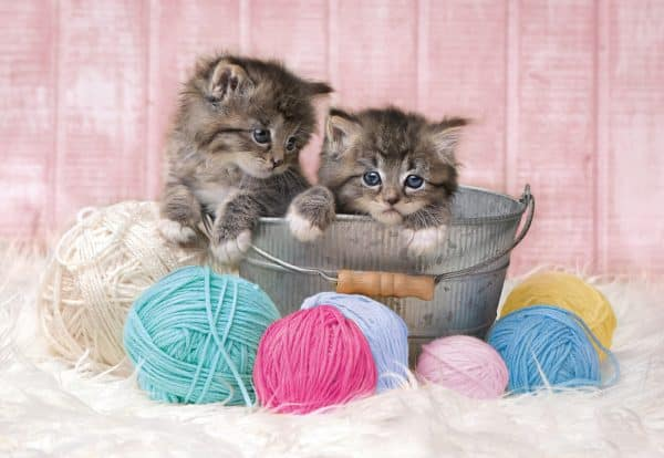 Kleine Kittens Katten