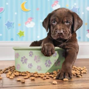 Labrador Puppy Voer Bak