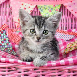 lief katje 1
