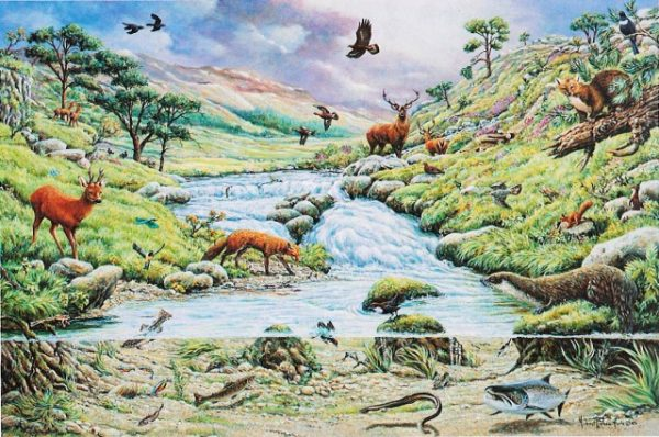 Mountain Stream The House Of Puzzles Legpuzzel 5060002001523 1.jpg