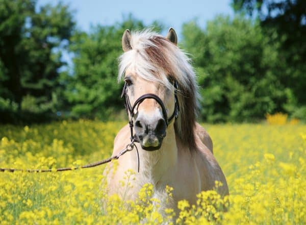 Paard Tussen De Bloemen Ravensburger150380 01 Legpuzzels.nl