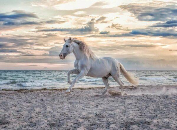 Paard Op Het Strand Legpuzzel