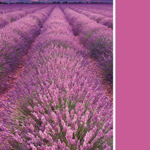 Pantone Collectie Lavendel Clementoni