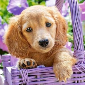 Puppy In Basket Castorland