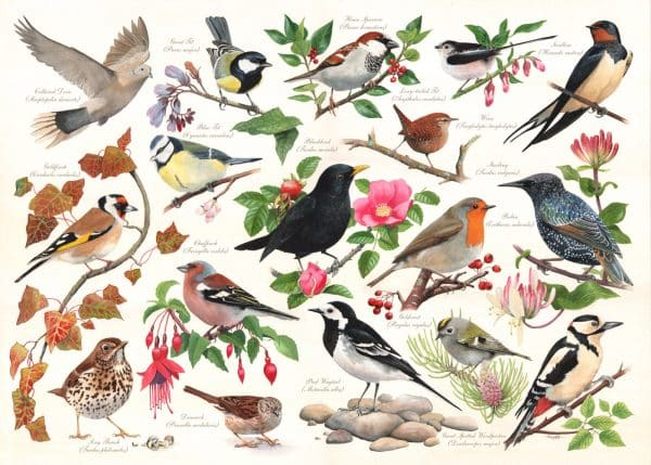 Puzzlestore Birds In My Garden 1000 Stukjes Mc471 1.jpg