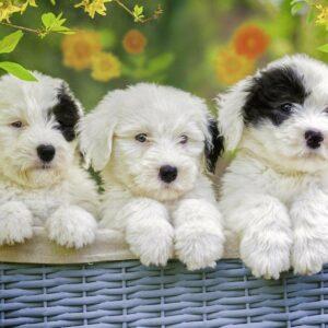 schattige puppies 127658 1 ravensburger