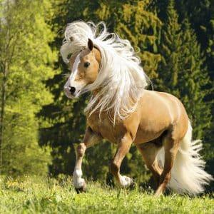 Vrolijk Paard Ravensburger150090 01 Legpuzzels.nl