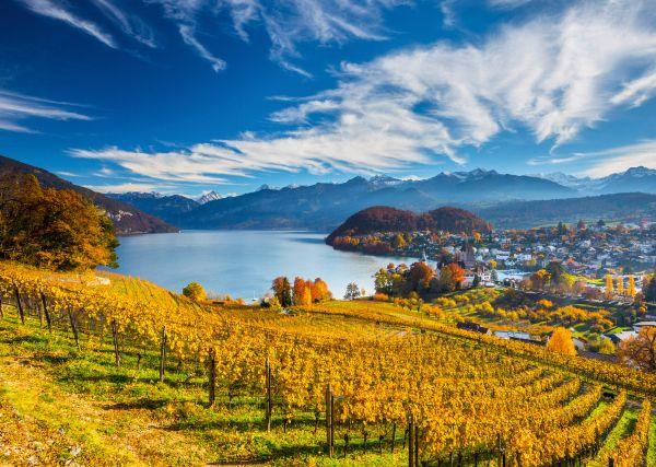 Wijngaarden Schmidt Premium Quality