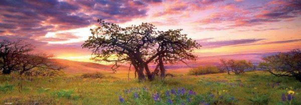 landschap boom