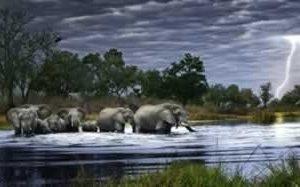 olifanten onweer
