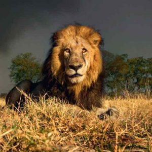 leeuw landschap