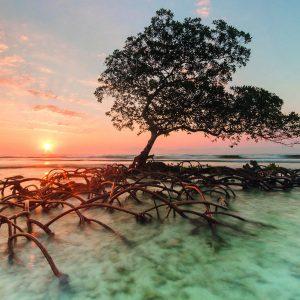 zee boom