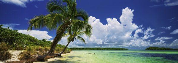 strand zee palmboom