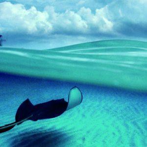 zee haai boot