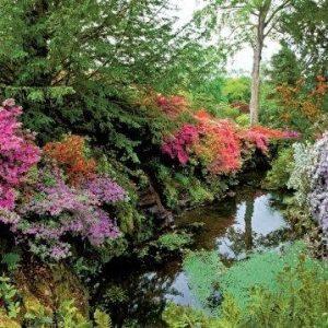 planten bloemen bomen