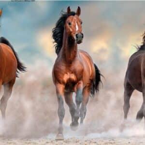 horses panorama puzzel clementoni39607 01 legpuzzels.nl