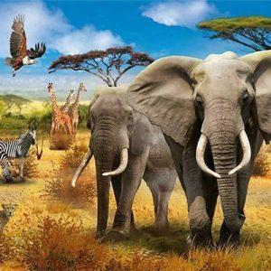 safari olifant zebra giraffe valk