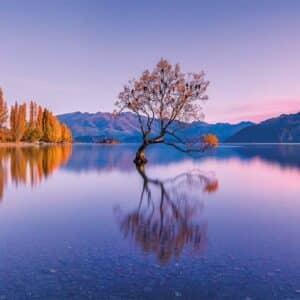 lake wanaka tree panorama puzzel clementoni39608 01 legpuzzels.nl