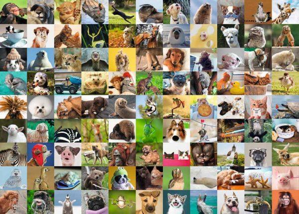 99 honden puppy