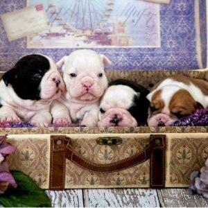 puppys educa